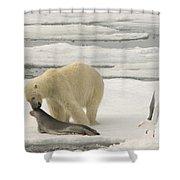 Polar Bear With Fresh Kill Shower Curtain