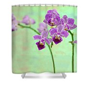 Purple Orchid-11 Shower Curtain