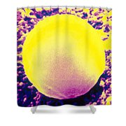 Red Blood Cell, Sem Shower Curtain