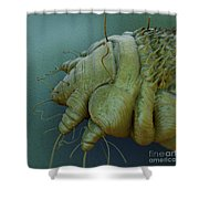 Scabies Mite Shower Curtain