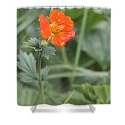 Scarlet Avens Orange Wild Flower Shower Curtain