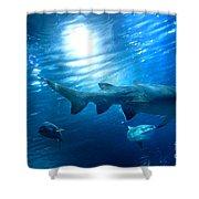 Underwater View Shower Curtain