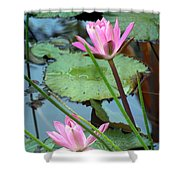 Pink Water Lily Pond Shower Curtain