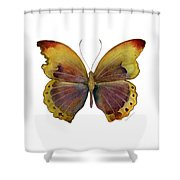 84 Gold-banded Glider Butterfly Shower Curtain by Amy Kirkpatrick