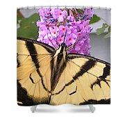 #859 D480 Swallowtail 2010.jpg Shower Curtain