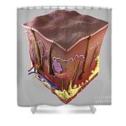 Anatomy Of Human Skin Shower Curtain