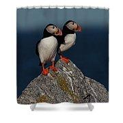 Atlantic Puffins Fratercula Arctica Shower Curtain