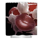 Blood Cells Shower Curtain