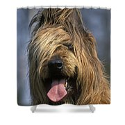 Briard Dog Shower Curtain