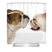 Bulldog Anglais Shower Curtain