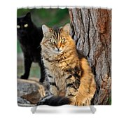 Cats In Hydra Island Shower Curtain