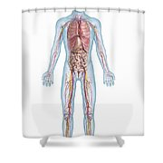 Internal Anatomy Pre-adolescent Shower Curtain