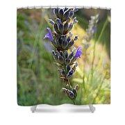 Lavender 6 Shower Curtain