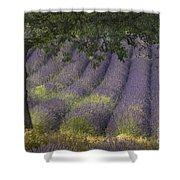Lavender Field, France Shower Curtain