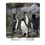 Macaroni Penguin Shower Curtain