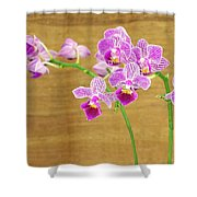Purple Orchid-12 Shower Curtain