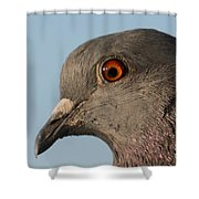 Rock Dove Shower Curtain
