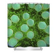 Rubella Virus Shower Curtain