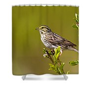 Savannah Sparrow Shower Curtain