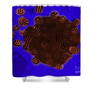 Tem Of Baculovirus Shower Curtain