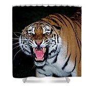 Tigre De Siberie Panthera Tigris Altaica Shower Curtain