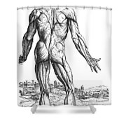 Vesalius: Muscles, 1543 Shower Curtain