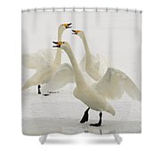 Whooper Swans Shower Curtain