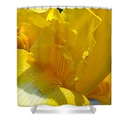 Yellow Iris 2 Shower Curtain