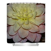 #928 D809 Dahlia Pink White Yellow Dahlia Thoughts Of You Shower Curtain