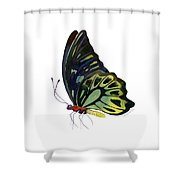 97 Perched Kuranda Butterfly Shower Curtain by Amy Kirkpatrick