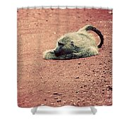 A Baboon On African Road Shower Curtain
