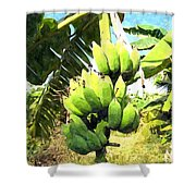 A Banana Field In Late Afternoon Sunlight With Sky And Clouds Shower Curtain