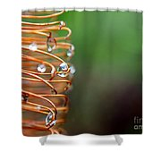 A Banksia Flowers Hold On Water Shower Curtain