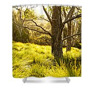 A Bare Tree Shower Curtain