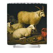 A Barn Interior With A Four-horned Ram And Four Ewes And A Goat Shower Curtain