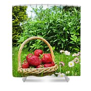 A Basket Of Strawberries Shower Curtain