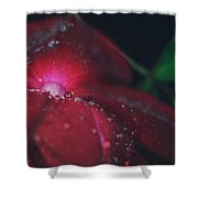 A Beacon Of Light Shower Curtain by Laurie Search