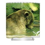 A Bear Bath Shower Curtain