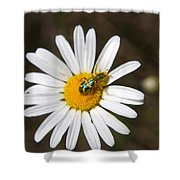 A Beattle On A Daisy Shower Curtain