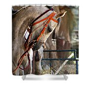 A Beautiful Horse Shower Curtain