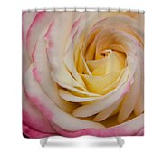 A Beautiful Pink Rose In Summertime Shower Curtain