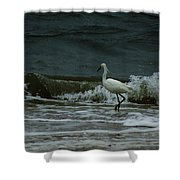 A Beautiful Snowy White Egret On Hilton Head Island Beach Shower Curtain