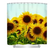 A Beautiful Sunflower Field Shower Curtain