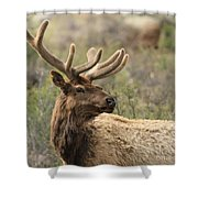 A Beautiful Young Rack Shower Curtain