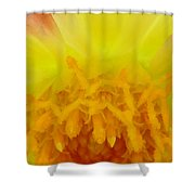 A Bee's Eye View Shower Curtain