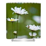A Bee's World Shower Curtain