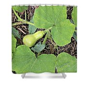 A Bell Shaped Squash Shower Curtain