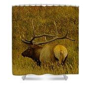 A Big Bull Elk Shower Curtain