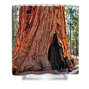 A Big Tree Shower Curtain