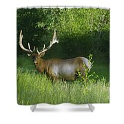 A Big Wide Rack  Shower Curtain